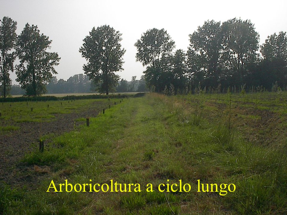 Arboricoltura a ciclo lungo