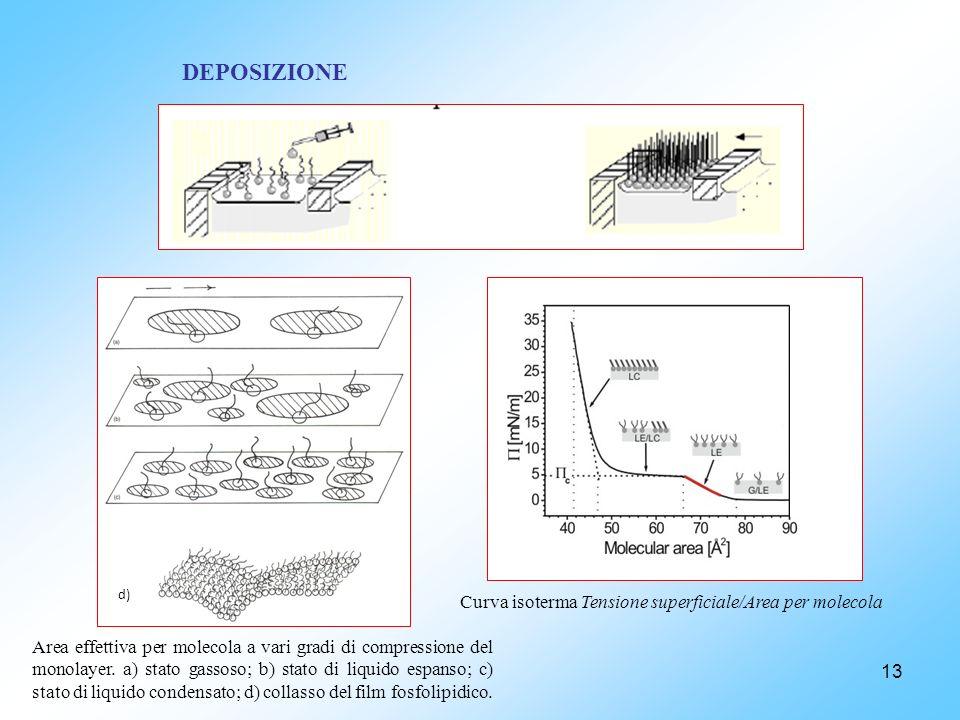 DEPOSIZIONE Curva isoterma Tensione superficiale/Area per molecola