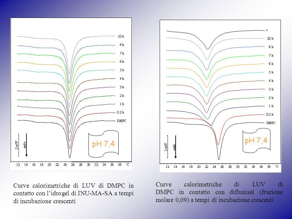 pH 7,4 pH 7,4. Curve calorimetriche di LUV di DMPC in contatto con l'idrogel di INU-MA-SA a tempi di incubazione crescenti.
