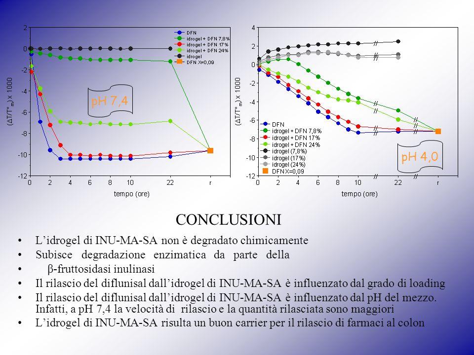 pH 7,4 pH 4,0. CONCLUSIONI. L'idrogel di INU-MA-SA non è degradato chimicamente. Subisce degradazione enzimatica da parte della.