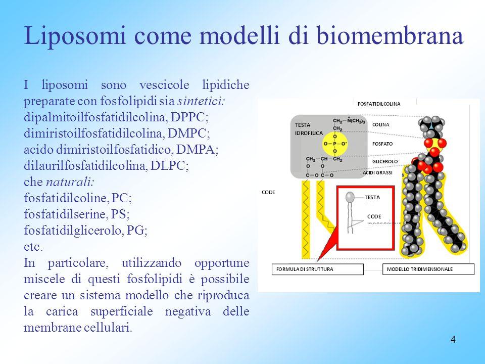 Liposomi come modelli di biomembrana