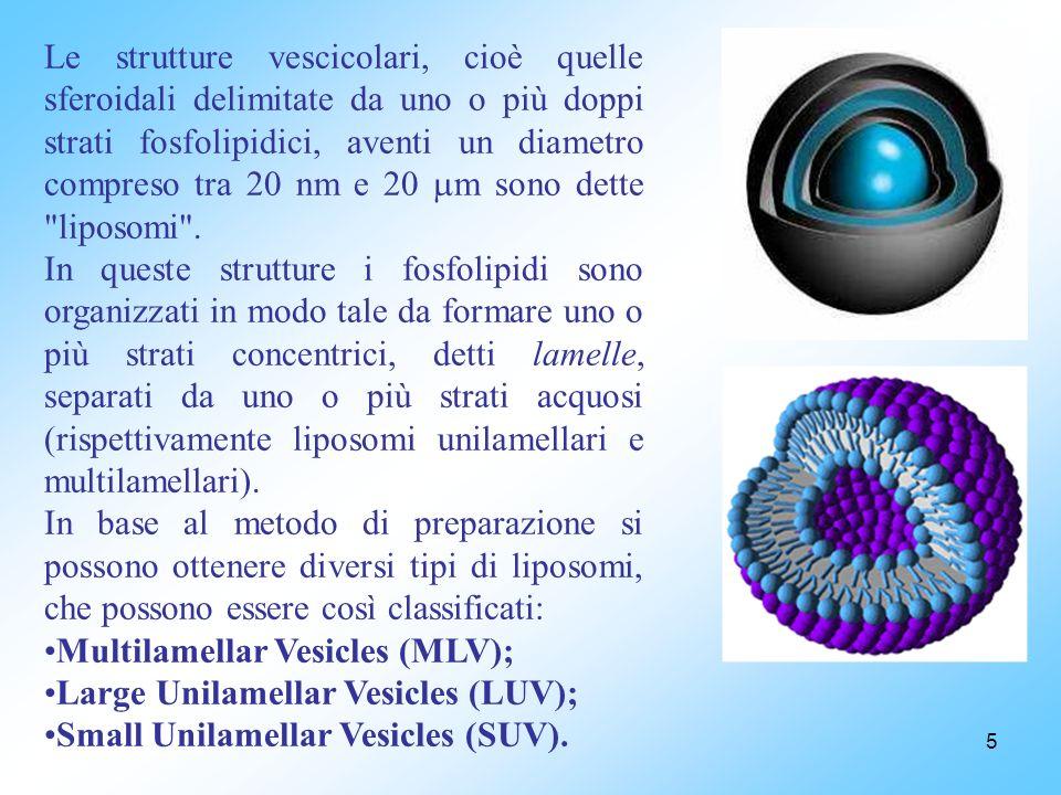 Le strutture vescicolari, cioè quelle sferoidali delimitate da uno o più doppi strati fosfolipidici, aventi un diametro compreso tra 20 nm e 20 m sono dette liposomi .