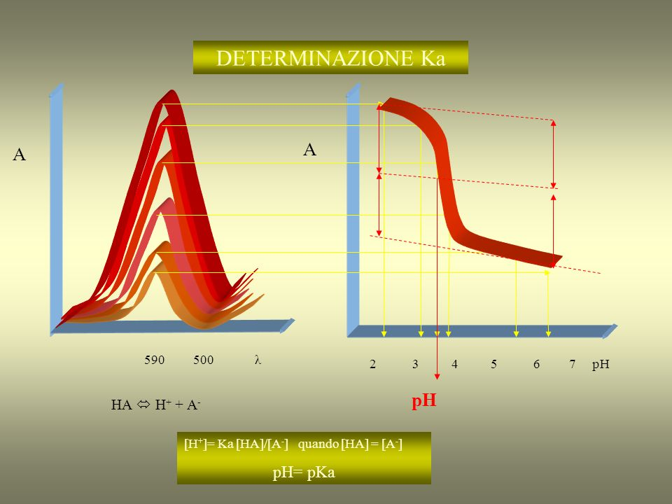 DETERMINAZIONE Ka A A HA  H+ + A- pH pH= pKa 590 500 λ 2 3 4 5 6 7 pH