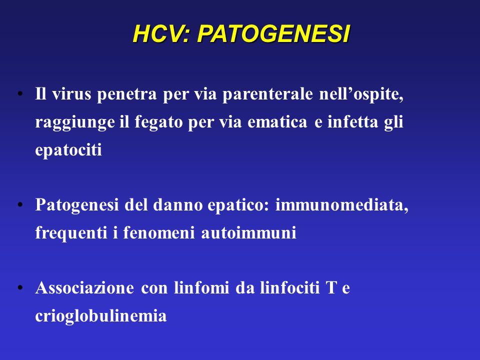 HCV: PATOGENESI Il virus penetra per via parenterale nell'ospite, raggiunge il fegato per via ematica e infetta gli epatociti.