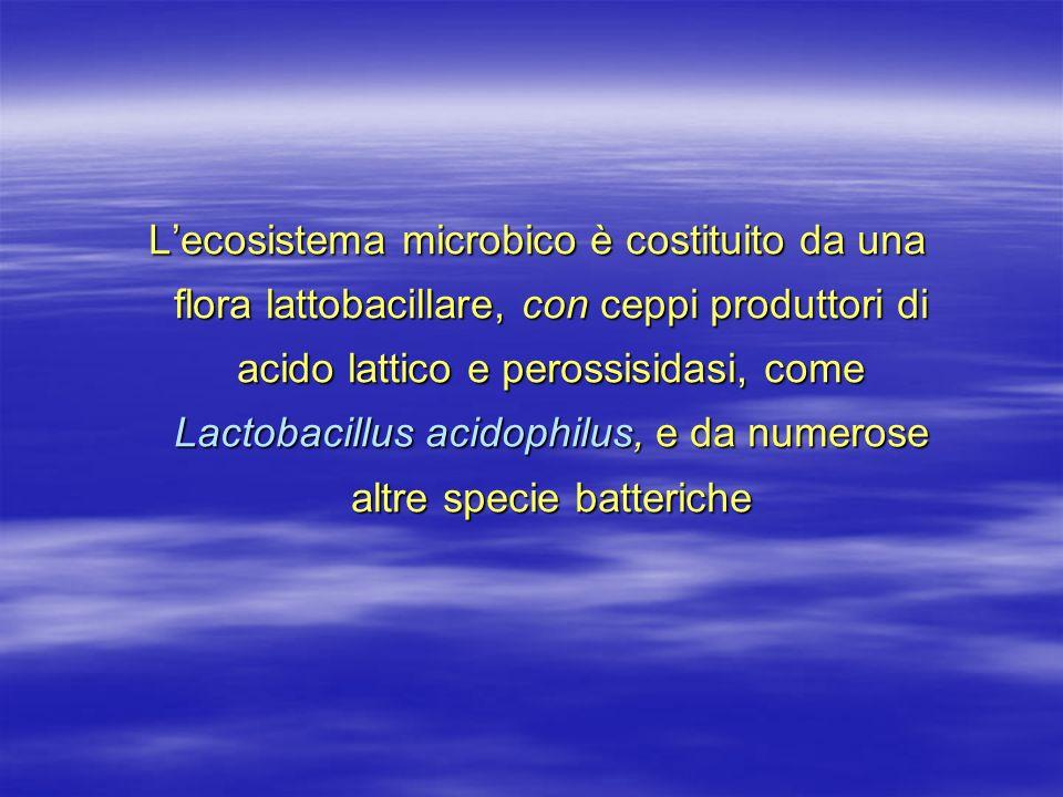 L'ecosistema microbico è costituito da una flora lattobacillare, con ceppi produttori di acido lattico e perossisidasi, come Lactobacillus acidophilus, e da numerose altre specie batteriche