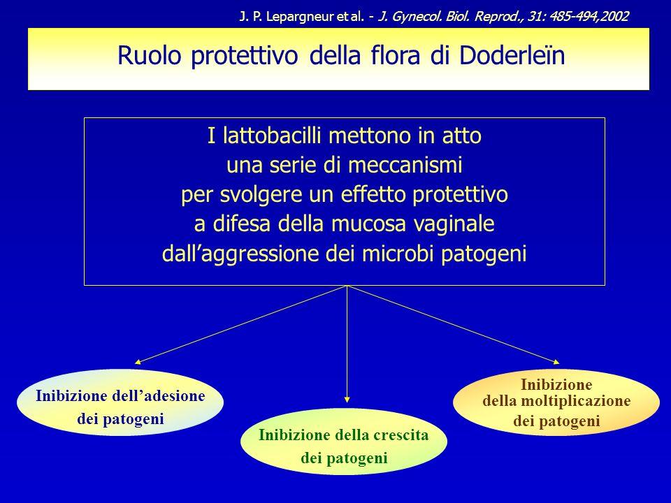 Ruolo protettivo della flora di Doderleïn