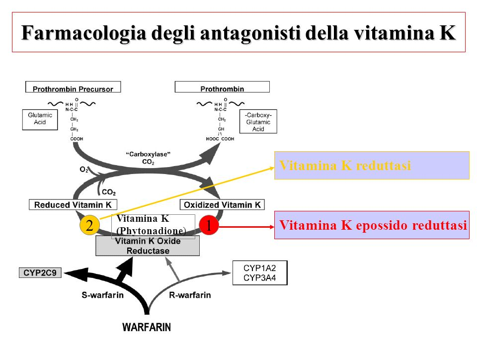 Farmacologia degli antagonisti della vitamina K
