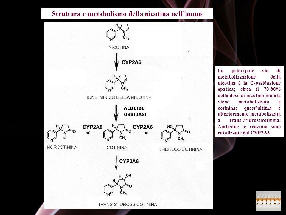 Struttura e metabolismo della nicotina nell'uomo
