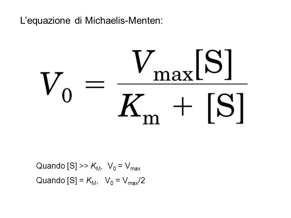 L'equazione di Michaelis-Menten: