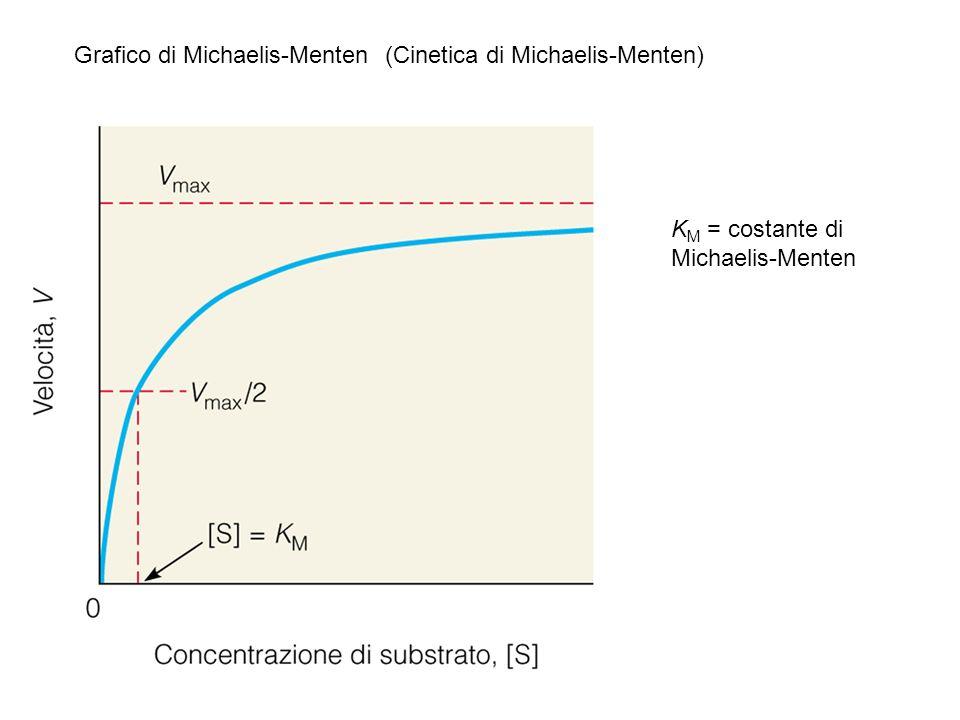 Grafico di Michaelis-Menten (Cinetica di Michaelis-Menten)