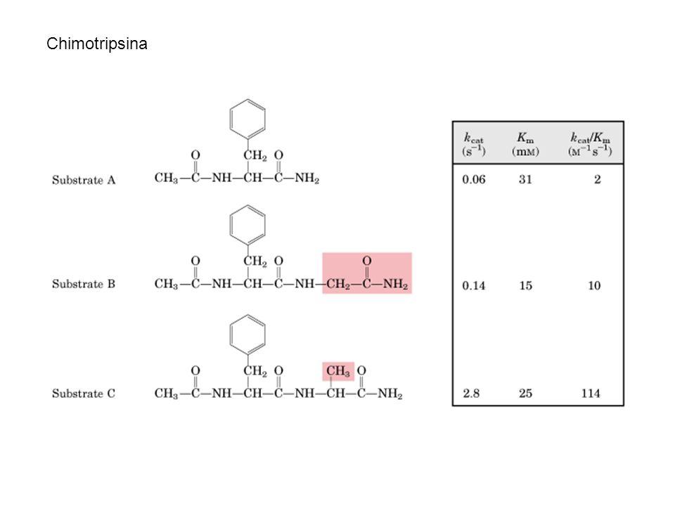 Chimotripsina