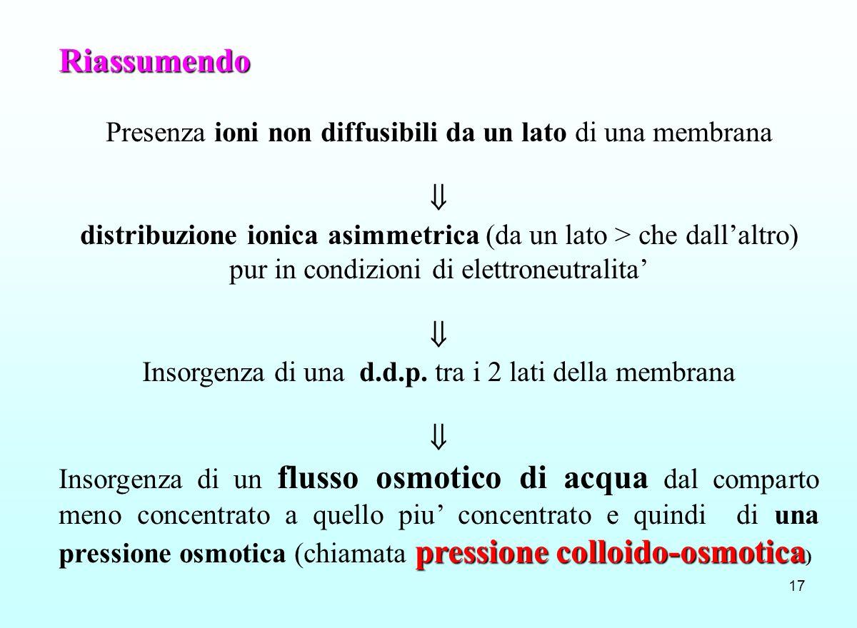 Riassumendo Presenza ioni non diffusibili da un lato di una membrana 
