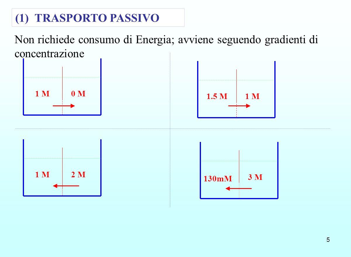 (1) TRASPORTO PASSIVONon richiede consumo di Energia; avviene seguendo gradienti di concentrazione.
