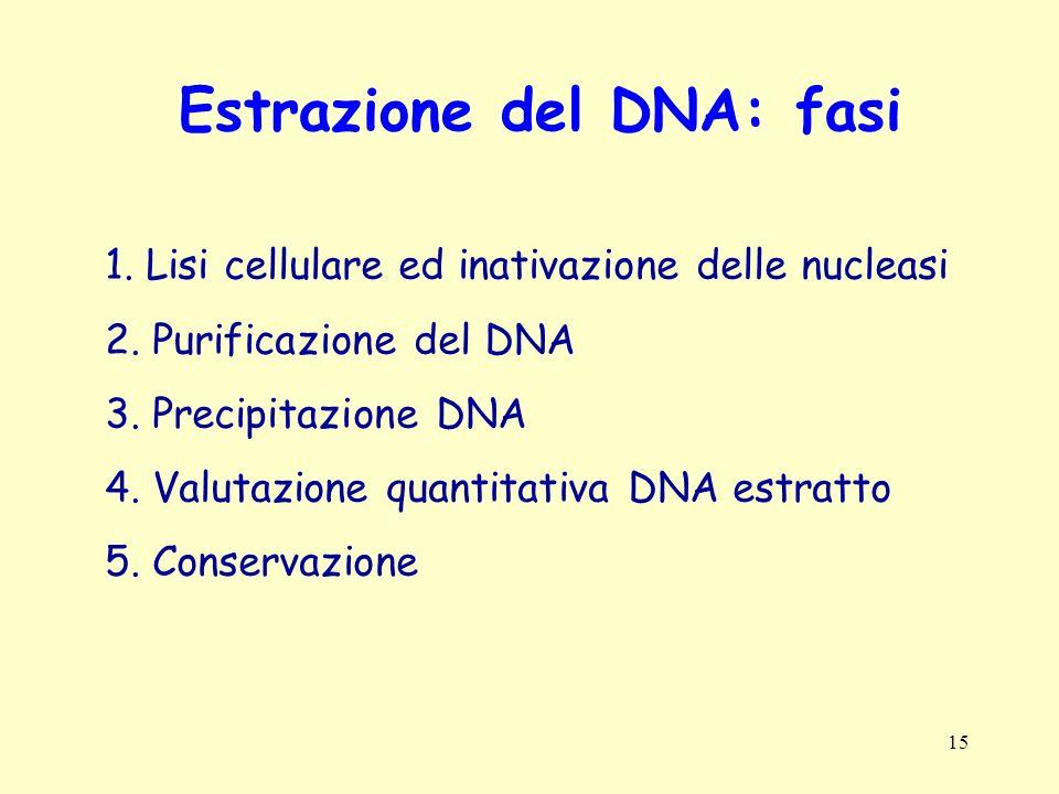 Estrazione del DNA: fasi