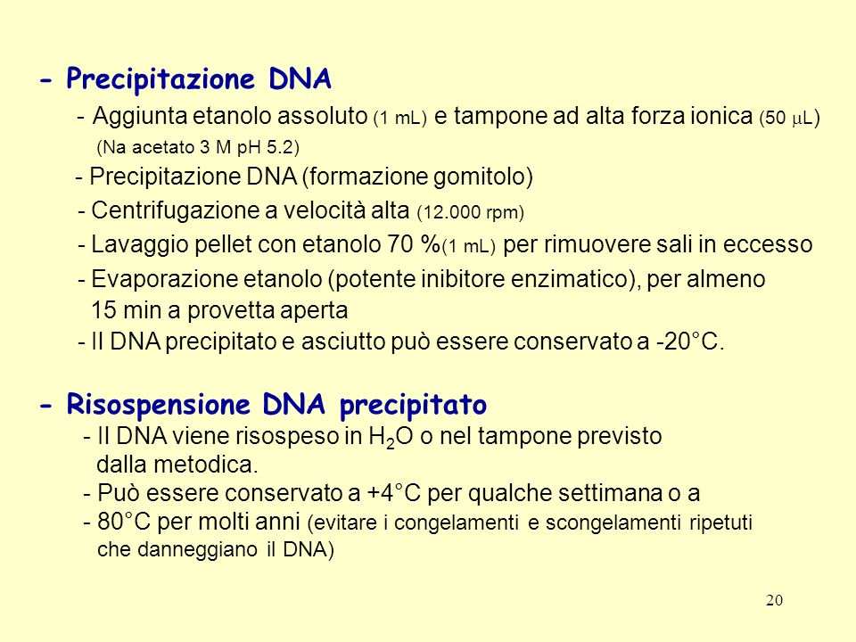 - Risospensione DNA precipitato
