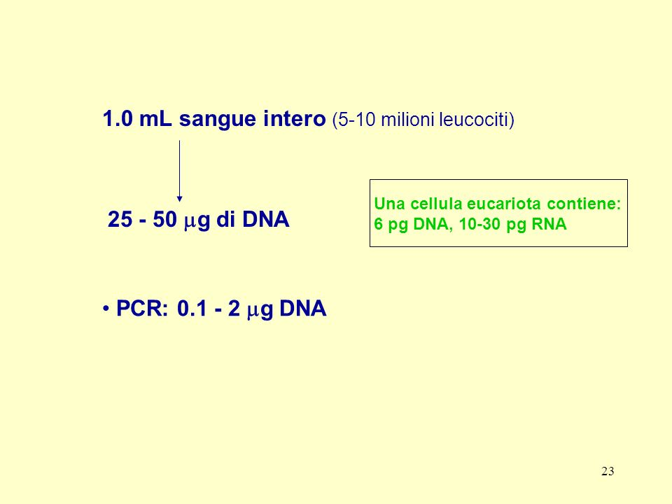 1.0 mL sangue intero (5-10 milioni leucociti)
