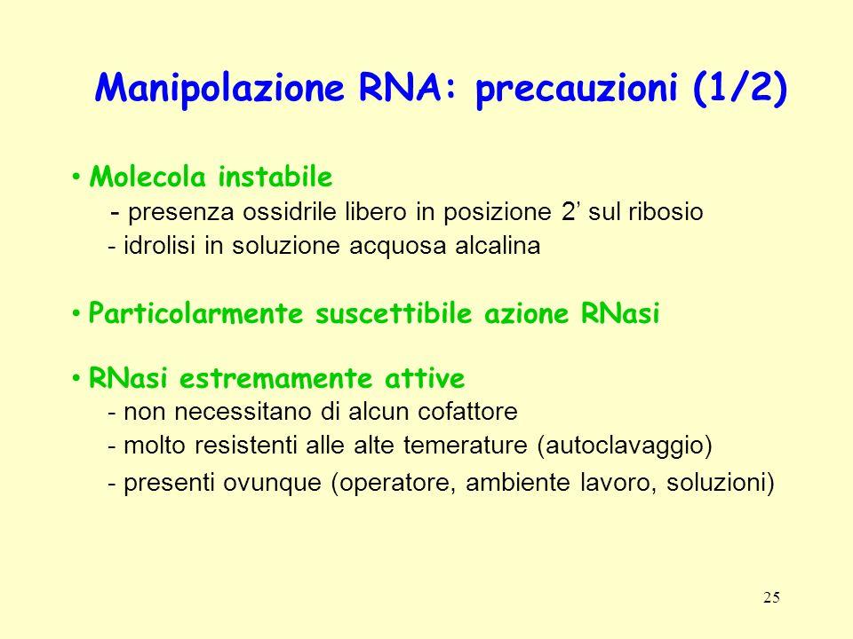 Manipolazione RNA: precauzioni (1/2)
