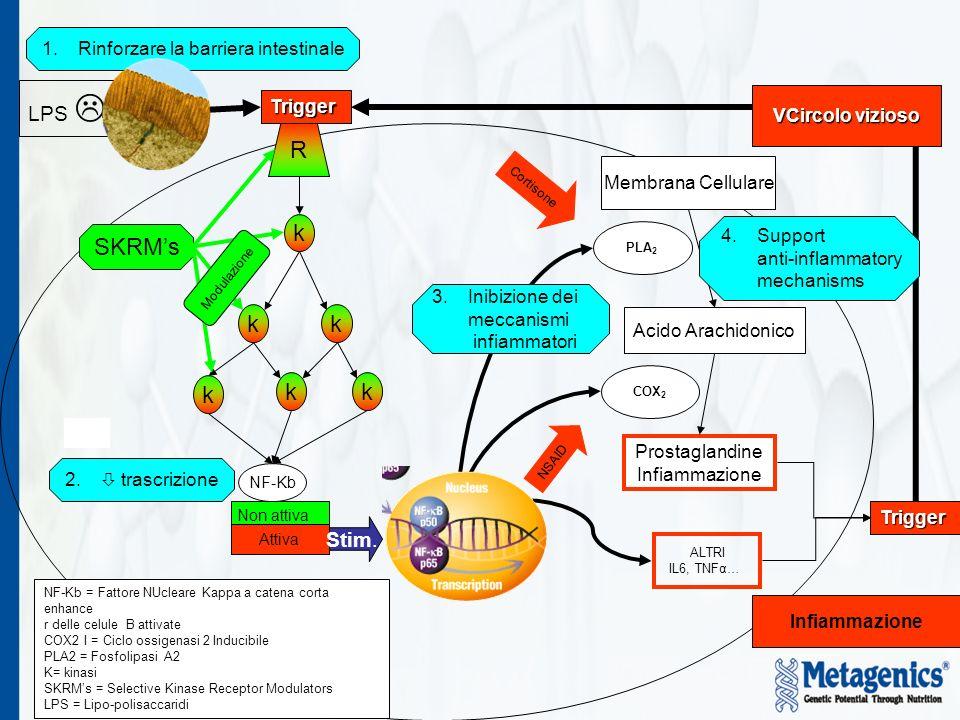 R k SKRM's k k k k k LPS  Stim. Rinforzare la barriera intestinale