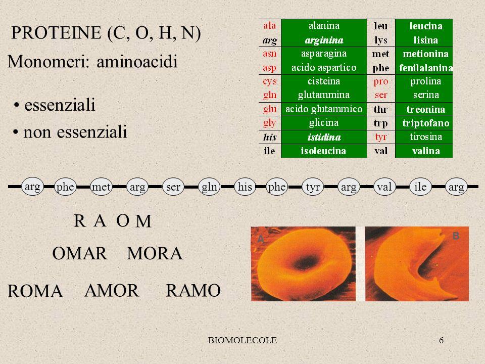PROTEINE (C, O, H, N) Monomeri: aminoacidi essenziali non essenziali R