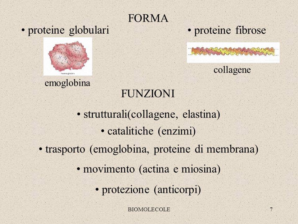 strutturali(collagene, elastina) catalitiche (enzimi)