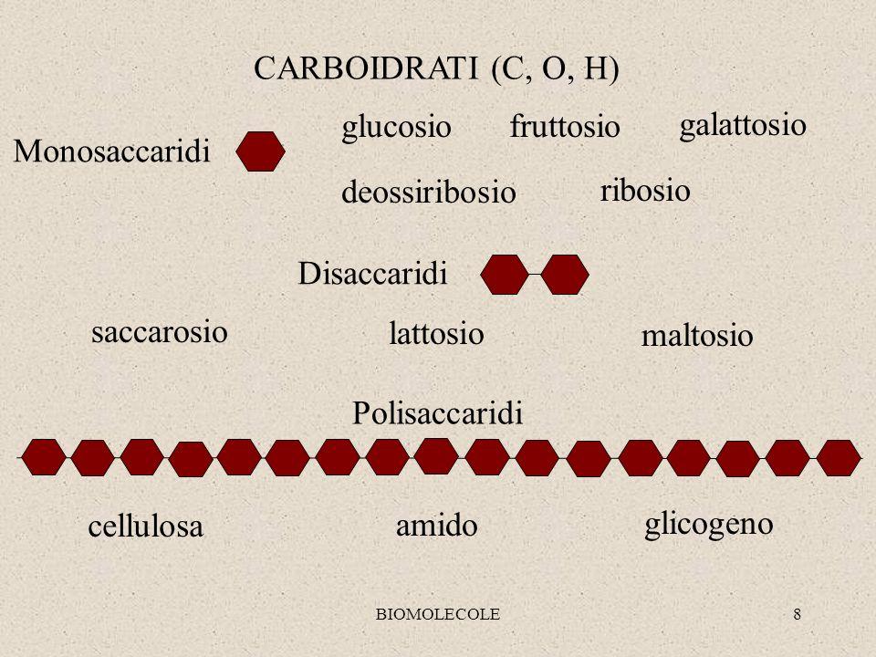 CARBOIDRATI (C, O, H) glucosio fruttosio galattosio Monosaccaridi