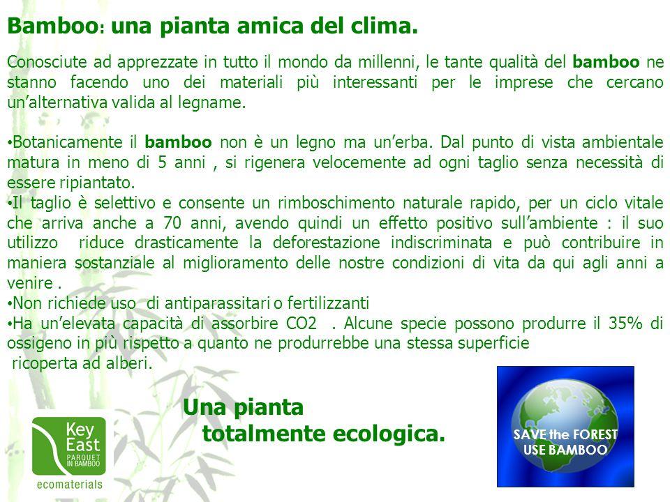 Bamboo: una pianta amica del clima.