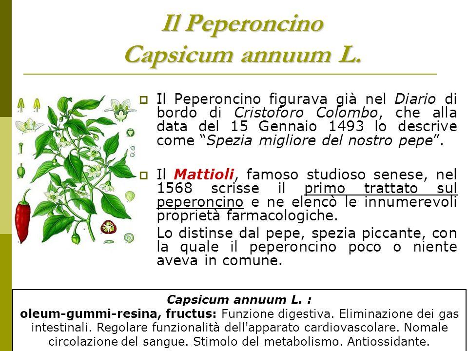 Il Peperoncino Capsicum annuum L.