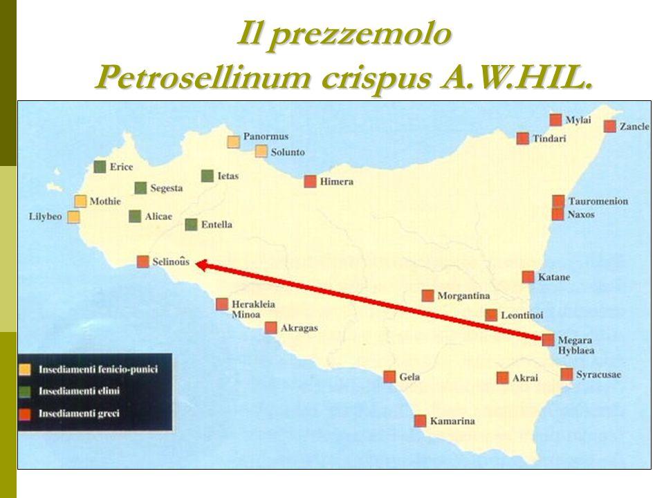 Il prezzemolo Petrosellinum crispus A.W.HIL.