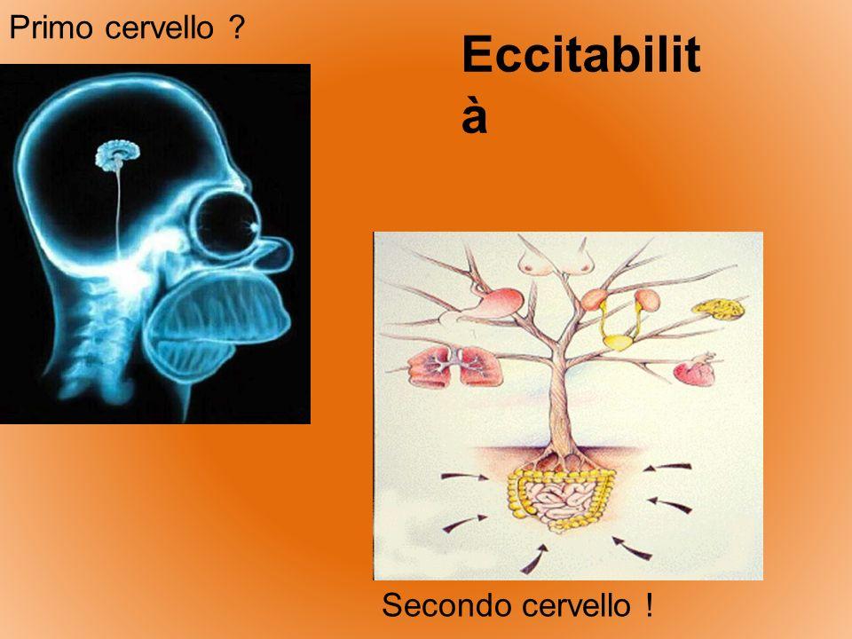 Primo cervello Eccitabilità Secondo cervello !