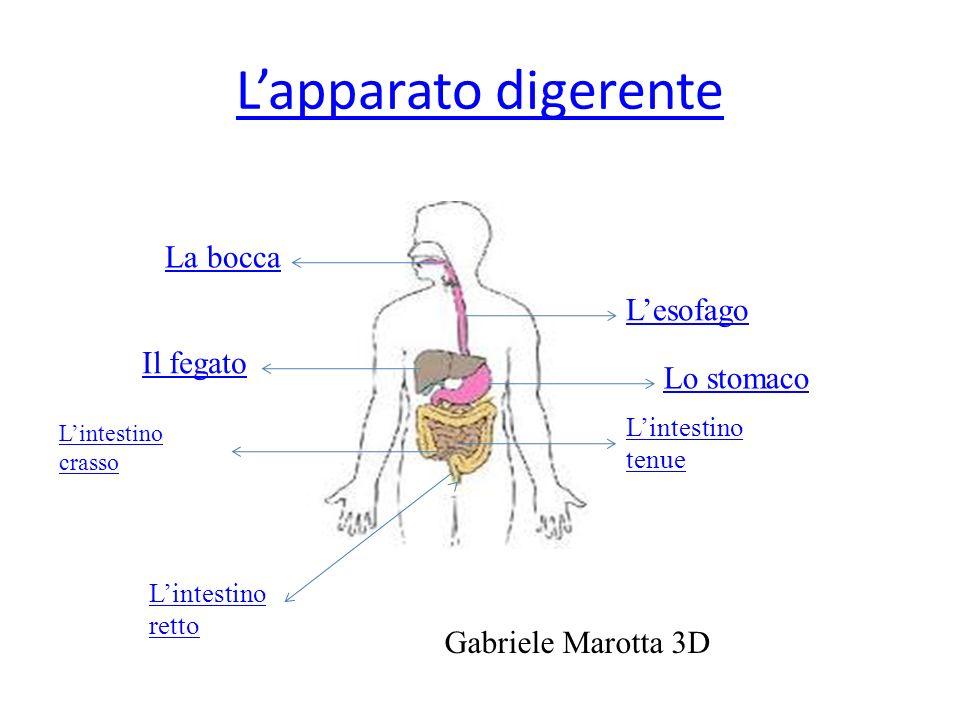 L'apparato digerente La bocca L'esofago Il fegato Lo stomaco