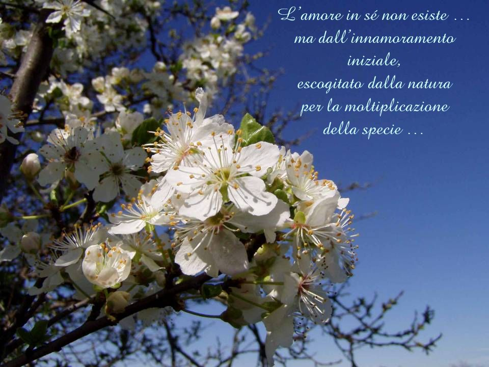 L'amore in sé non esiste … ma dall'innamoramento iniziale, escogitato dalla natura per la moltiplicazione della specie …