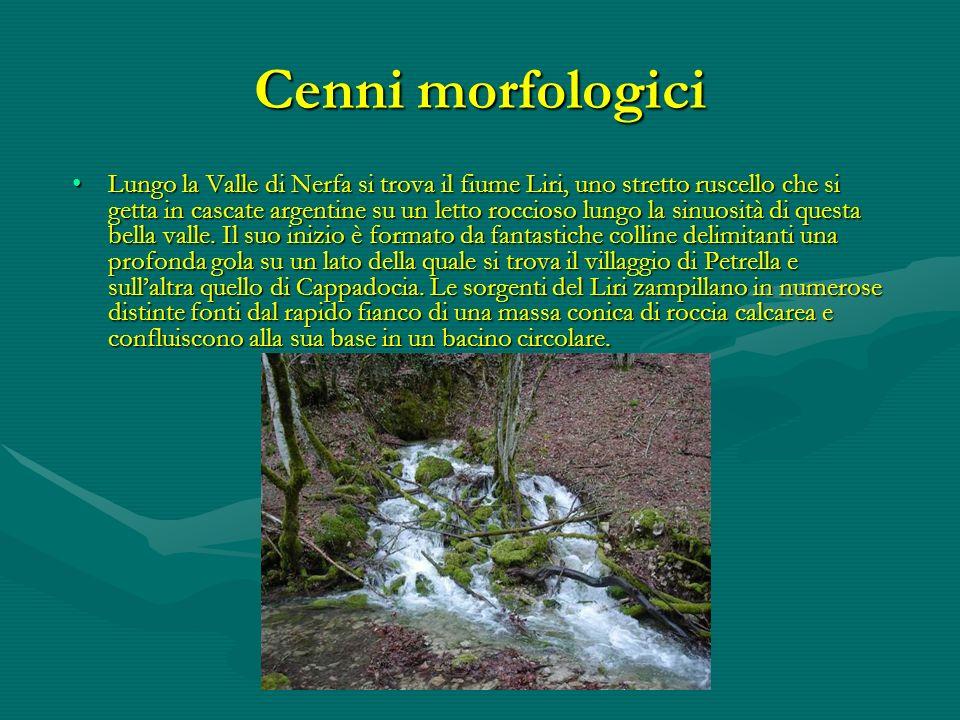 Cenni morfologici