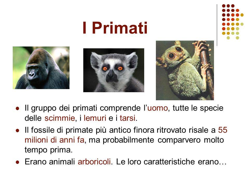I Primati Il gruppo dei primati comprende l'uomo, tutte le specie delle scimmie, i lemuri e i tarsi.