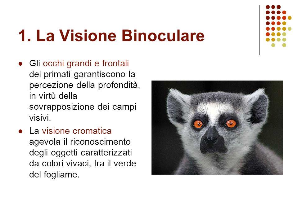 1. La Visione Binoculare