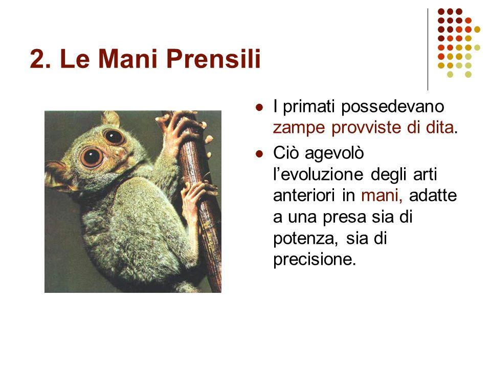 2. Le Mani Prensili I primati possedevano zampe provviste di dita.