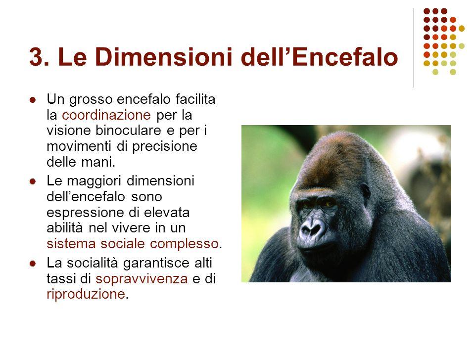 3. Le Dimensioni dell'Encefalo
