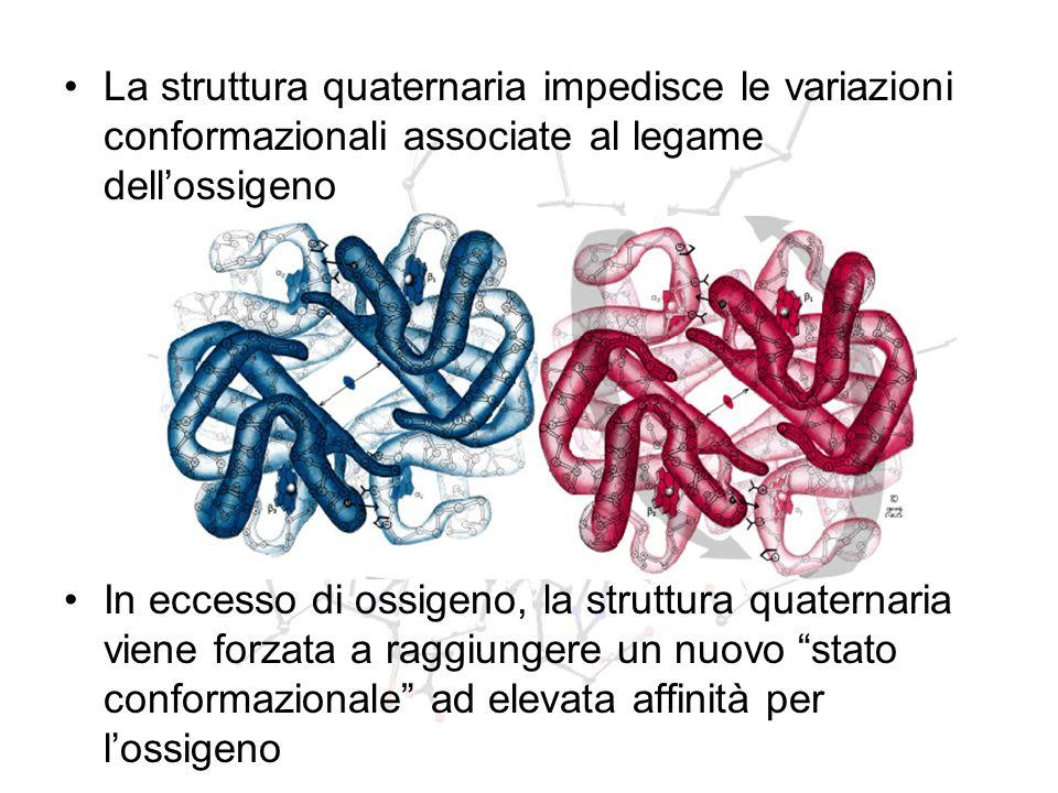 La struttura quaternaria impedisce le variazioni conformazionali associate al legame dell'ossigeno