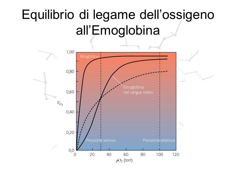 Equilibrio di legame dell'ossigeno all'Emoglobina