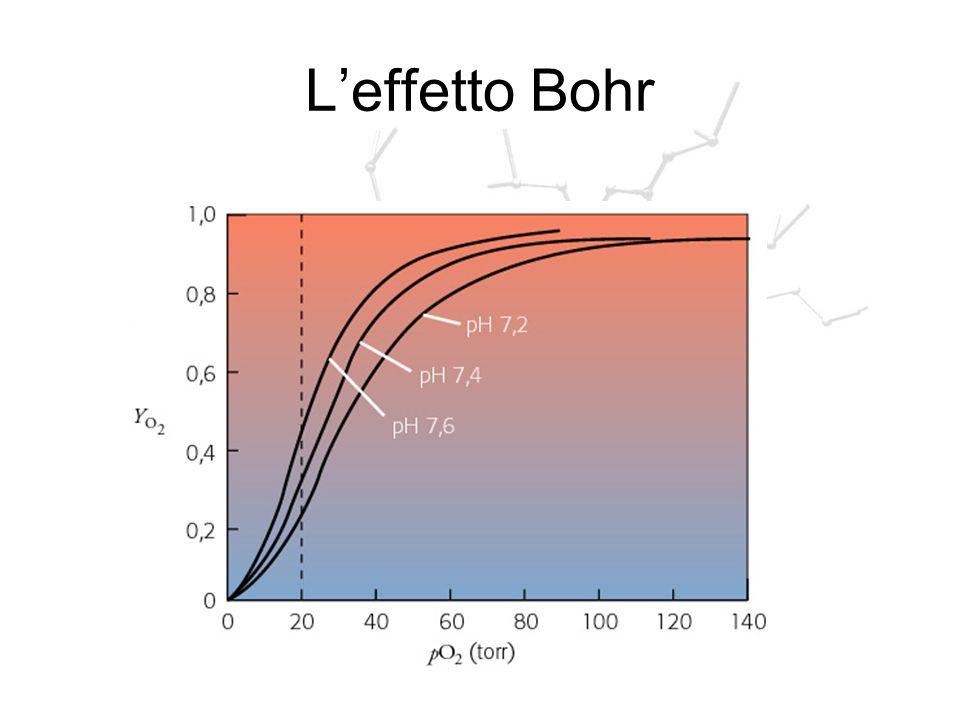 L'effetto Bohr