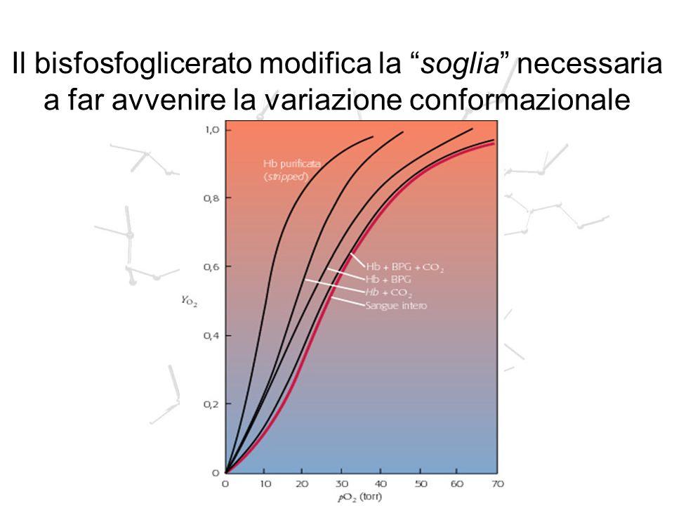 Il bisfosfoglicerato modifica la soglia necessaria a far avvenire la variazione conformazionale