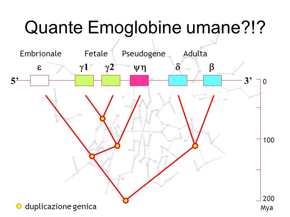 Quante Emoglobine umane !