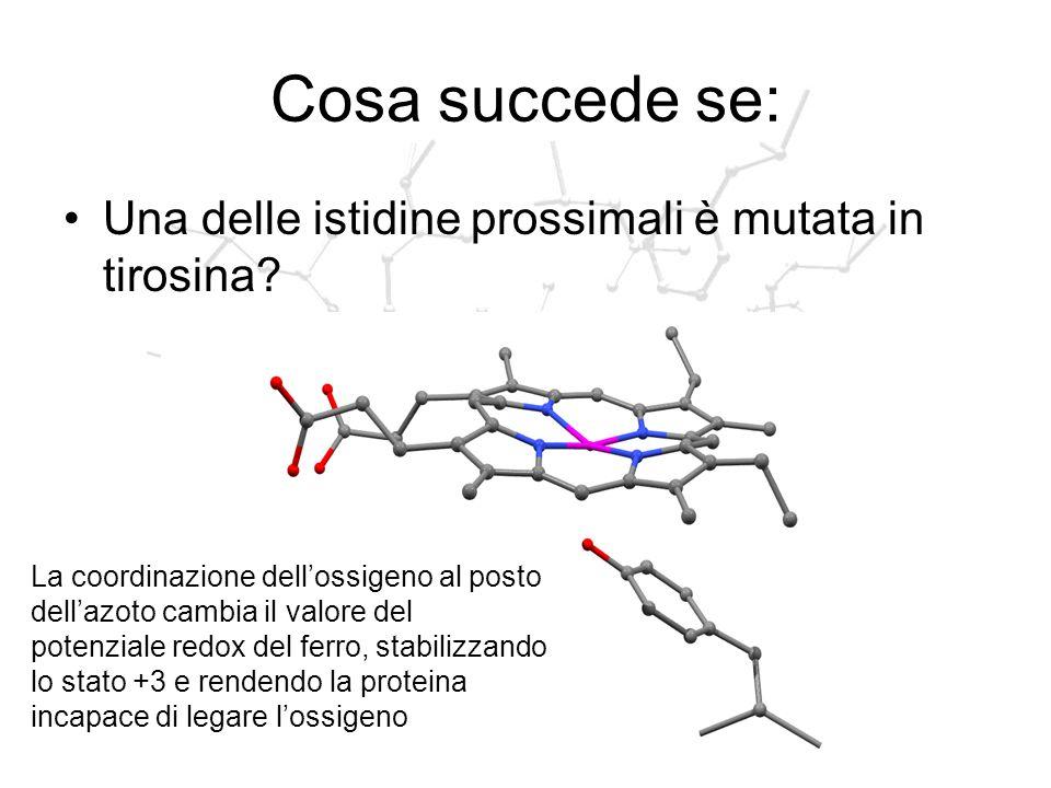 Cosa succede se: Una delle istidine prossimali è mutata in tirosina