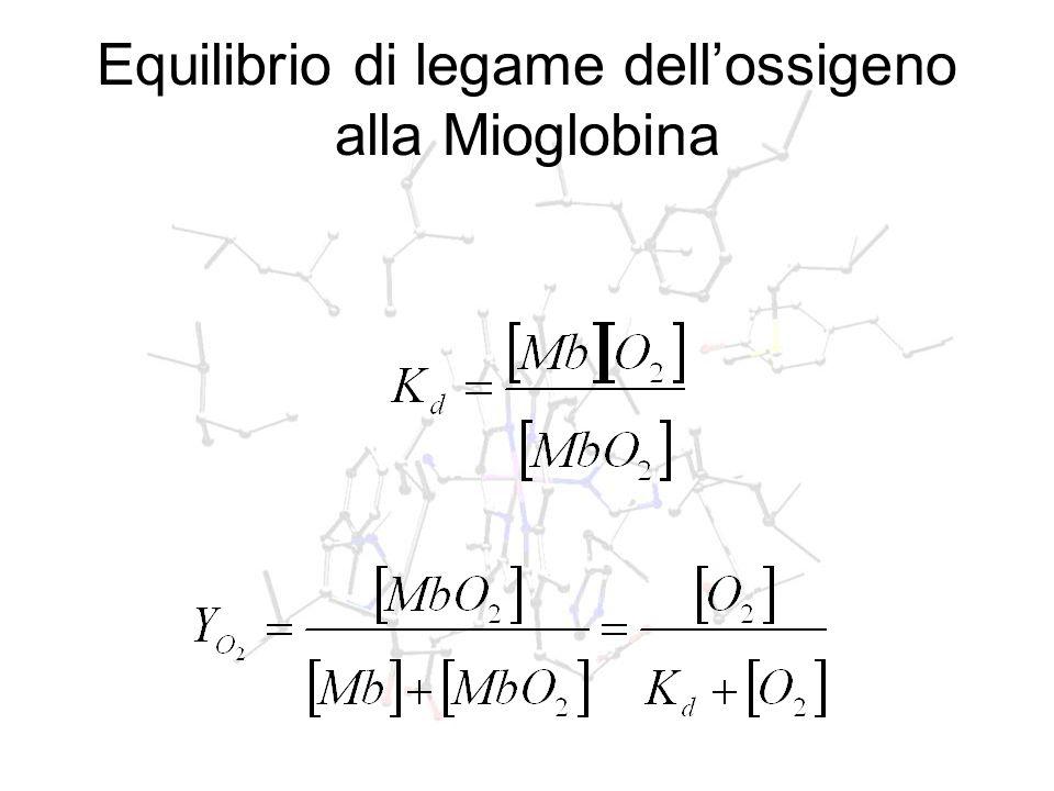 Equilibrio di legame dell'ossigeno alla Mioglobina