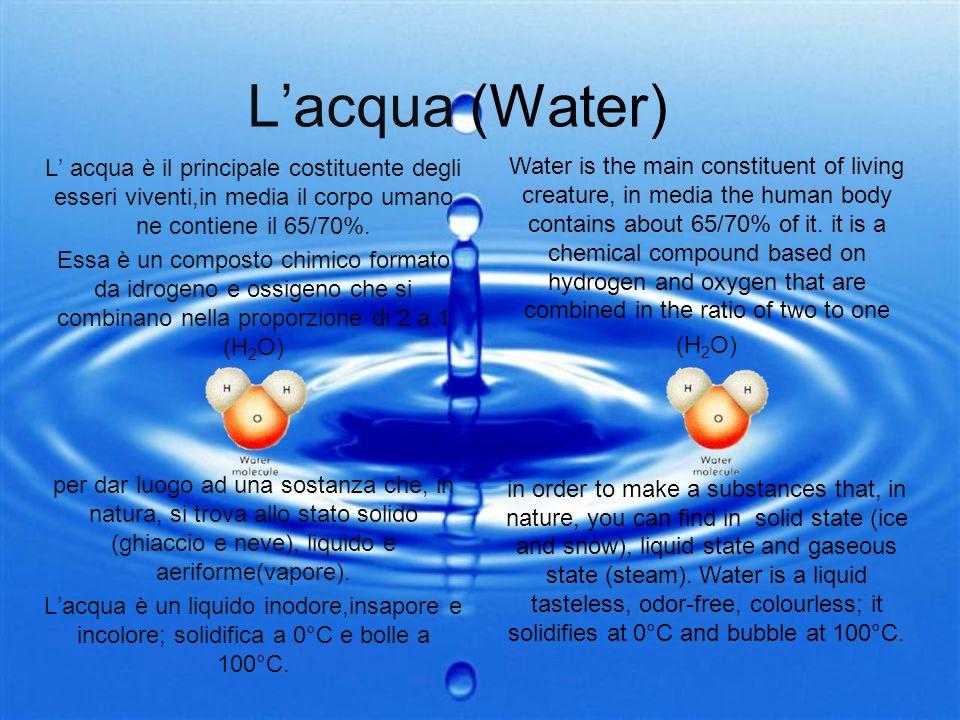 L'acqua (Water) L' acqua è il principale costituente degli esseri viventi,in media il corpo umano ne contiene il 65/70%.