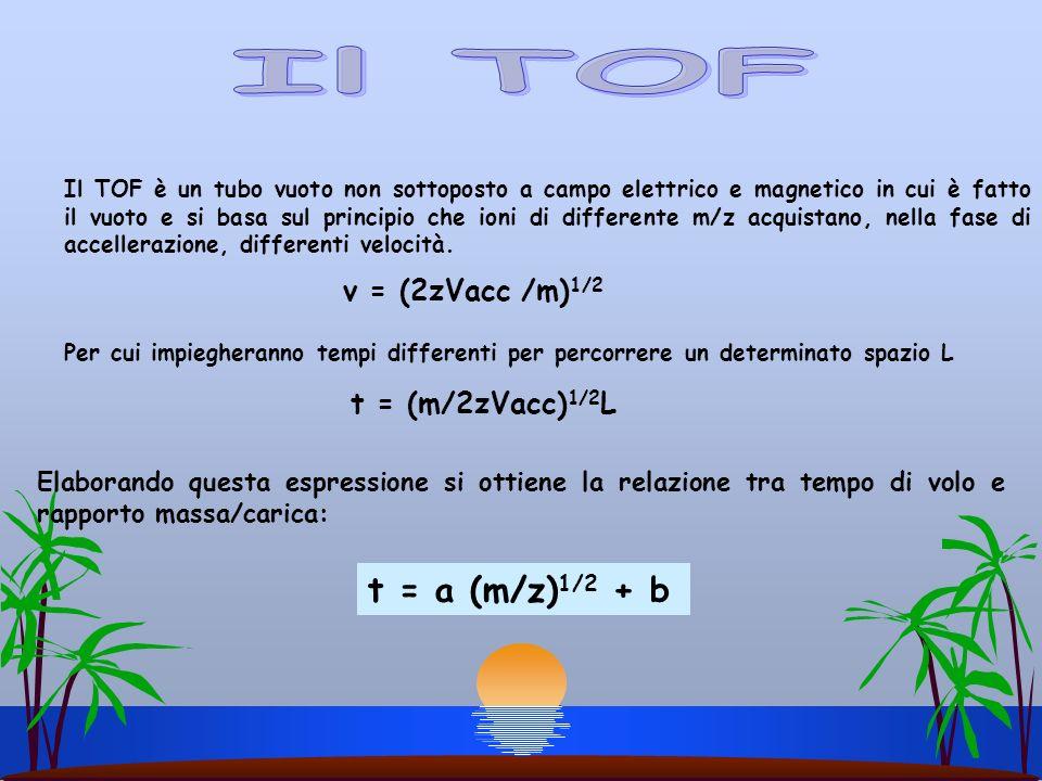 Il TOF t = a (m/z)1/2 + b v = (2zVacc /m)1/2 t = (m/2zVacc)1/2L
