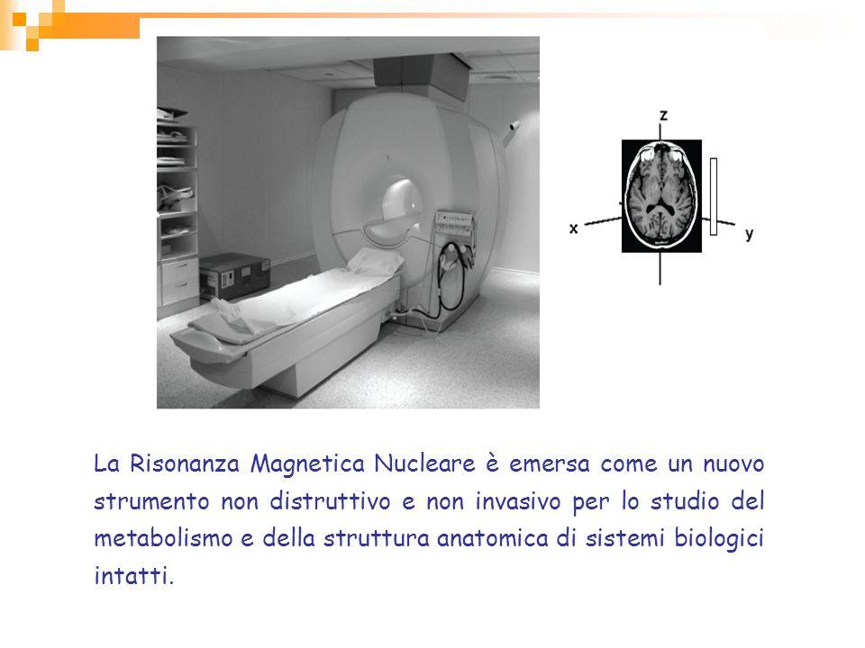La Risonanza Magnetica Nucleare è emersa come un nuovo strumento non distruttivo e non invasivo per lo studio del metabolismo e della struttura anatomica di sistemi biologici intatti.