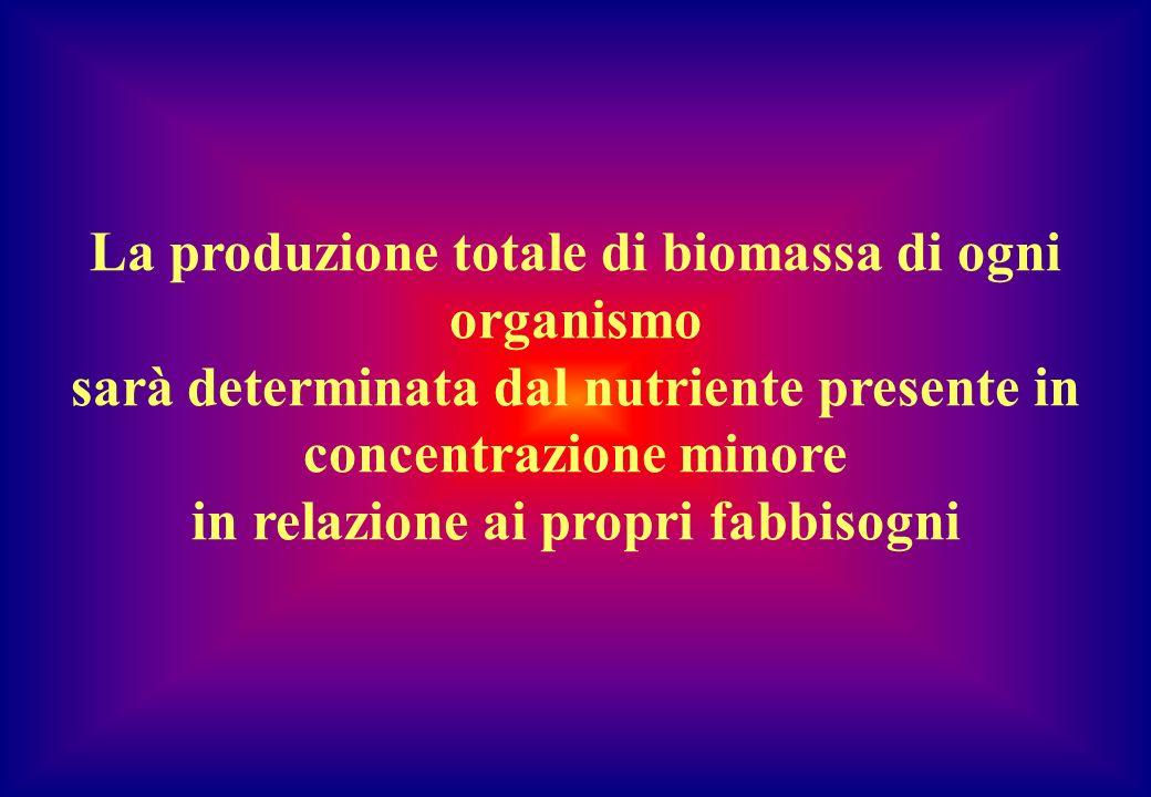 La produzione totale di biomassa di ogni organismo