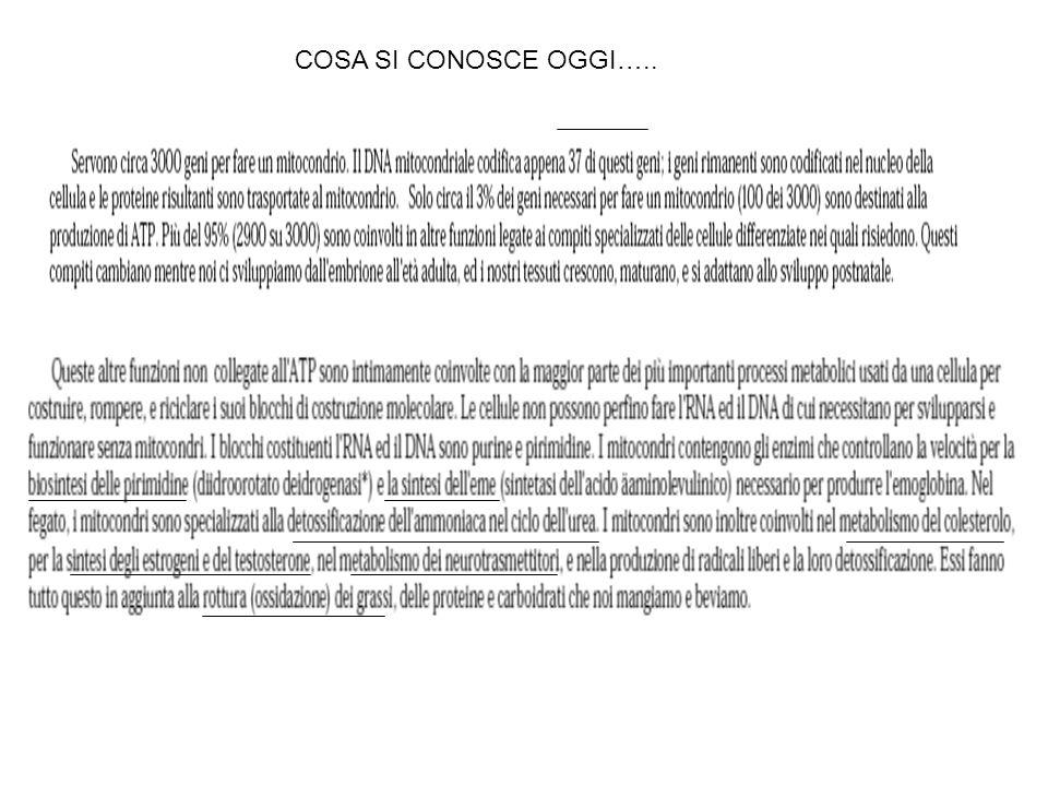 COSA SI CONOSCE OGGI…..