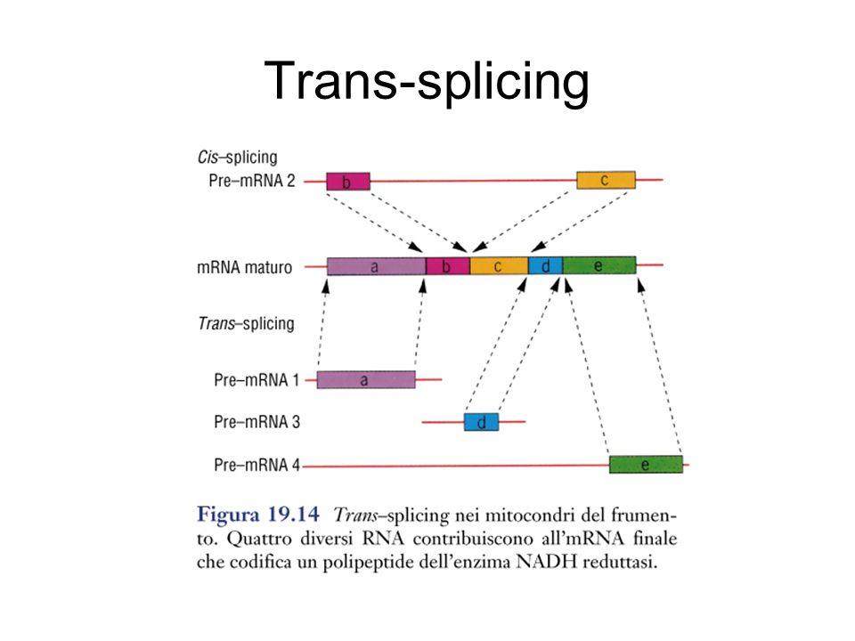 Trans-splicing