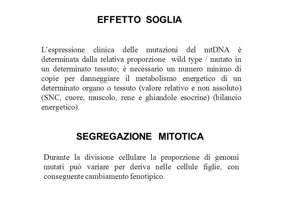 SEGREGAZIONE MITOTICA